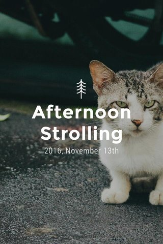 Afternoon Strolling 2016, November 13th