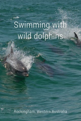 Swimming with wild dolphins Rockingham, Western Australia