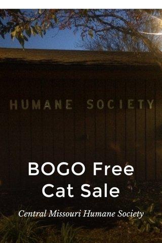 BOGO Free Cat Sale Central Missouri Humane Society