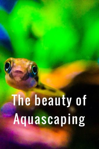 The beauty of Aquascaping