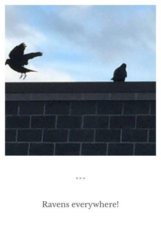 Ravens everywhere!