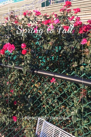 Spring to Fall A photography transition.