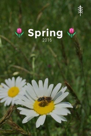 🌷 Spring 🌷 2016
