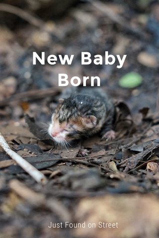 New Baby Born Just Found on Street