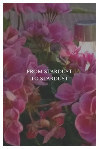 FROM STARDUST TO STARDUST