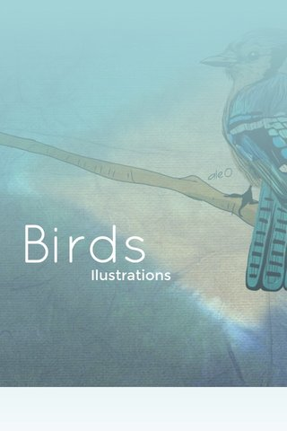 Birds Ilustrations