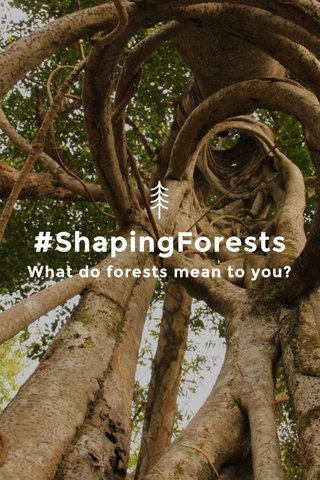 #ShapingForests What do forests mean to you?