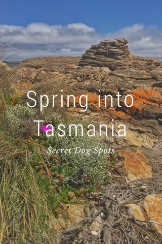 Spring into Tasmania Secret Dog Spots