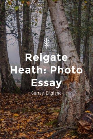 Reigate Heath: Photo Essay Surrey, England