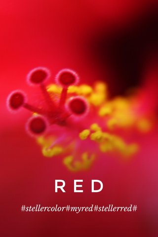 RED #stellercolor#myred#stellerred#
