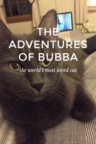 THE ADVENTURES OF BUBBA the world's most loved cat