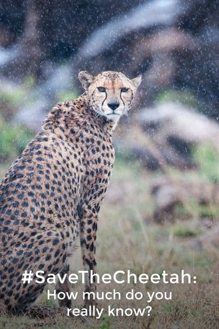 #SaveTheCheetah: How much do you really know?