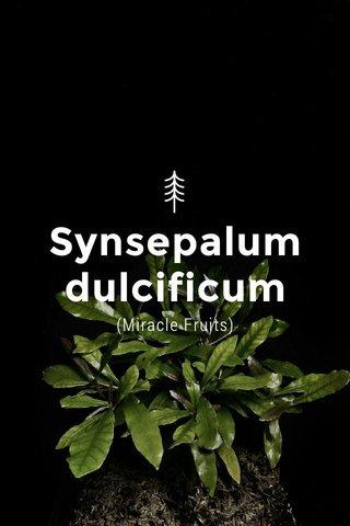 Synsepalum dulcificum (Miracle Fruits)