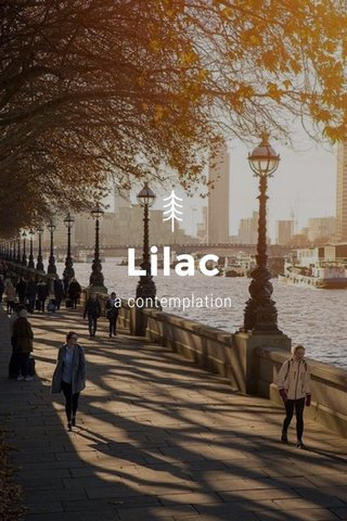 Lilac a contemplation