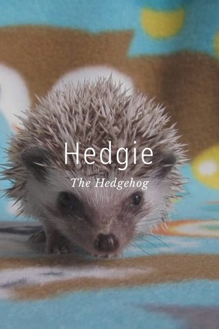 Hedgie The Hedgehog