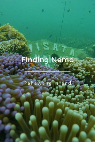 Finding Nemo Pahawang Island