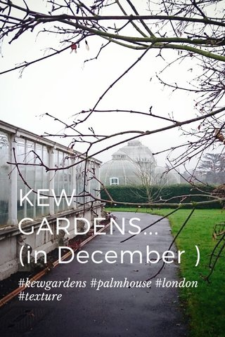 KEW GARDENS... (in December ) #kewgardens #palmhouse #london #texture