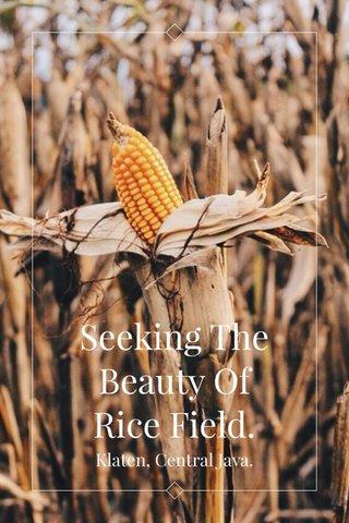 Seeking The Beauty Of Rice Field. Klaten, Central Java.