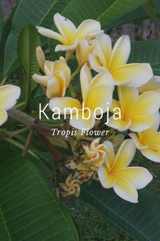 Kamboja Tropis Flower