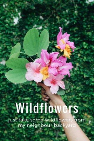 Wildflowers just take some wildflowers from my neighbour backyard
