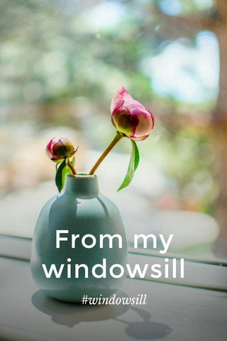 From my windowsill #windowsill