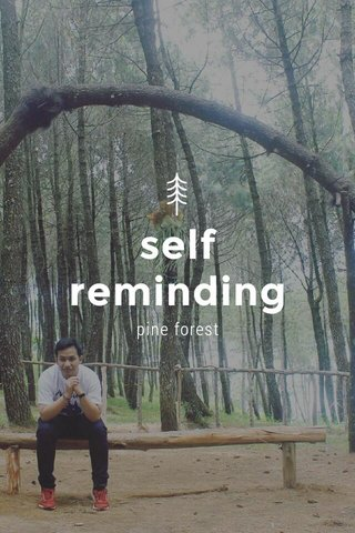 self reminding pine forest