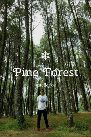 Pine Forest #stellerjoy
