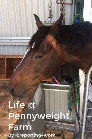 Life @ Pennyweight Farm By @reporting4work