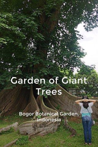 Garden of Giant Trees Bogor Botanical Garden, Indonesia
