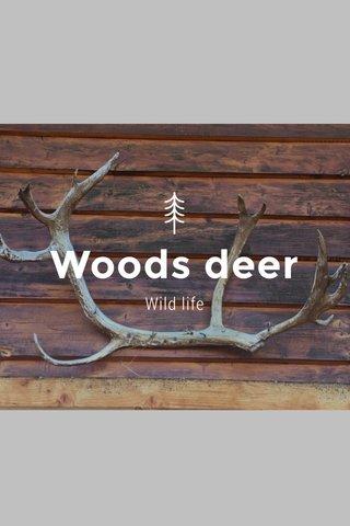 Woods deer Wild life