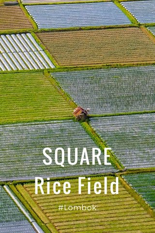SQUARE Rice Field #Lombok