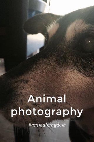 Animal photography #animalkingdom
