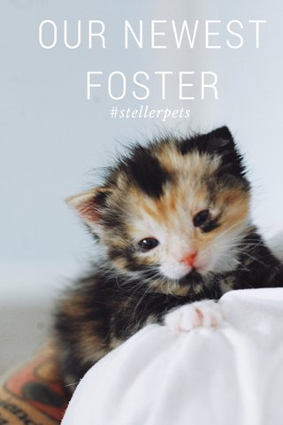 OUR NEWEST FOSTER #stellerpets