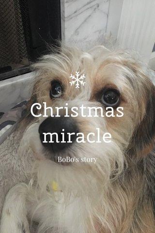 Christmas miracle BoBo's story