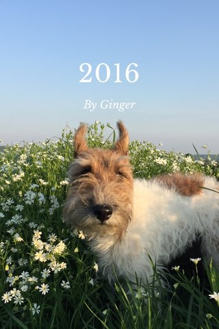 2016 By Ginger