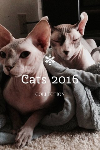 Cats 2016 COLLECTION
