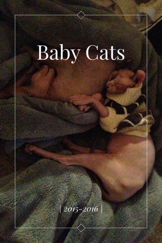Baby Cats | 2015-2016 |