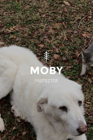 MOBY PROTECTOR
