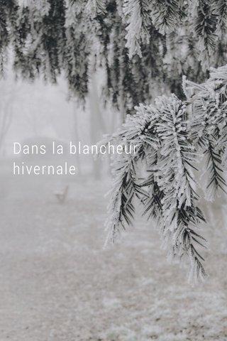 Dans la blancheur hivernale Bois Saint-Mart