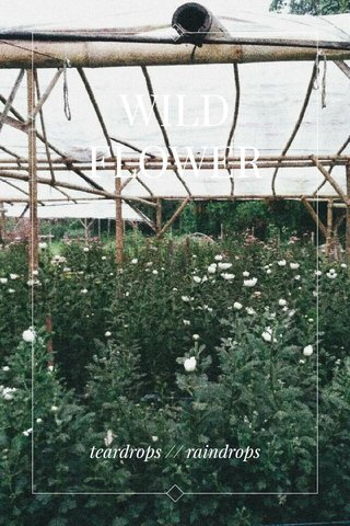 WILDFLOWER teardrops // raindrops