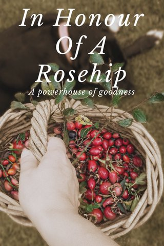 In Honour Of A Rosehip A powerhouse of goodness