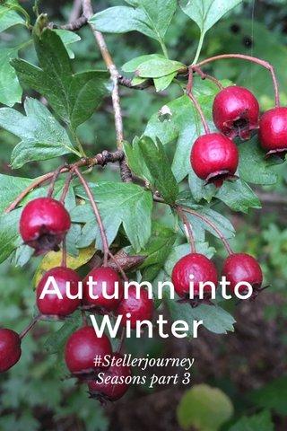 Autumn into Winter #Stellerjourney Seasons part 3