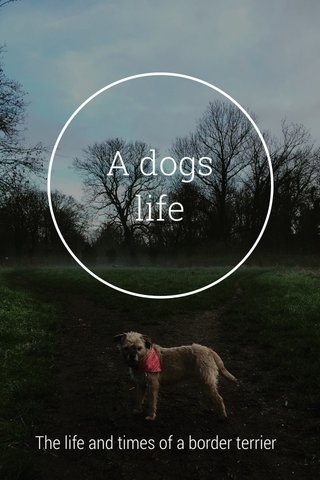 A dogs life The life and times of a border terrier