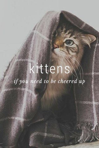 kittens if you need to be cheered up
