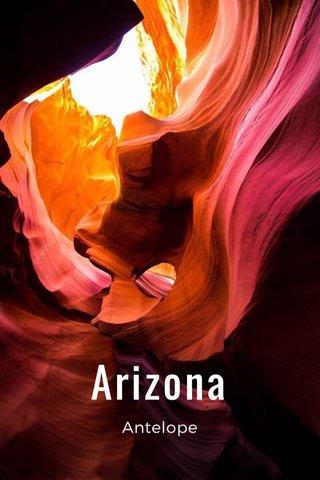 Arizona Antelope