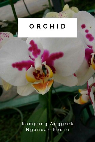 ORCHID Kampung Anggrek Ngancar-Kediri