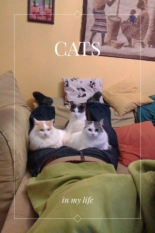 CATS in my life