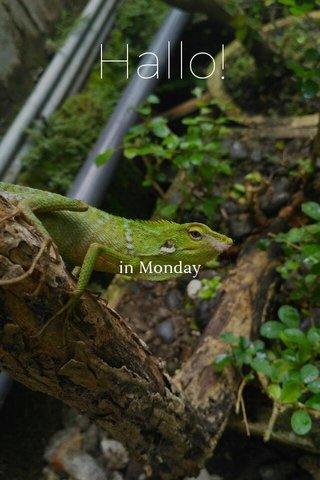 Hallo! in Monday