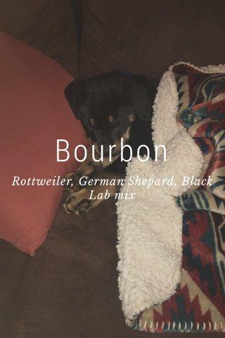 Bourbon Rottweiler, German Shepard, Black Lab mix