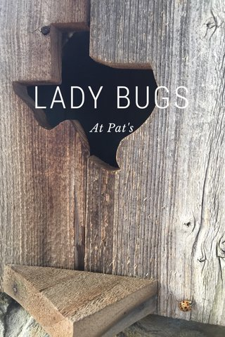 LADY BUGS At Pat's